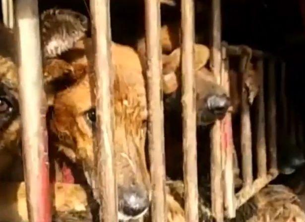Honden met bebloede koppen, foto rita wong