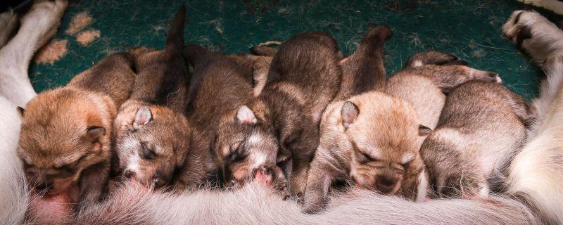 F2 pups