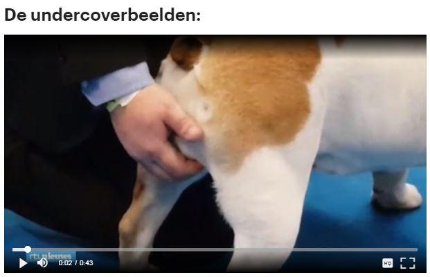 screenshot RTL-nieuws