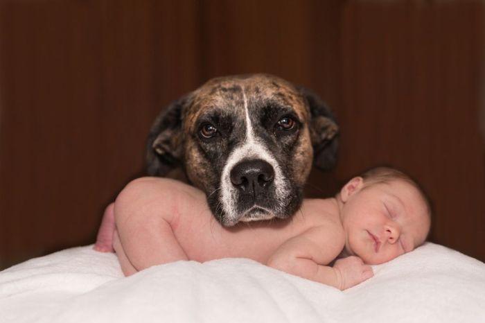 hond en baby