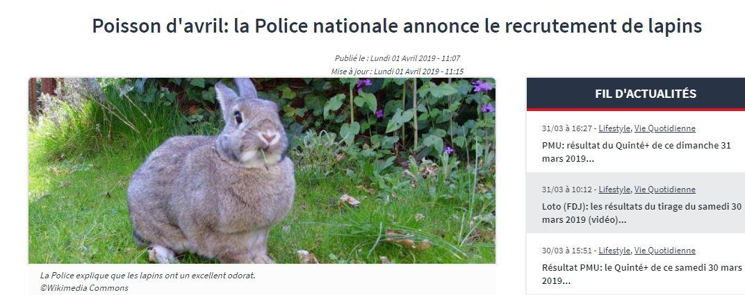 konijn