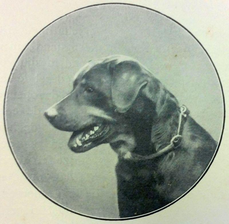 rottweiler 1875