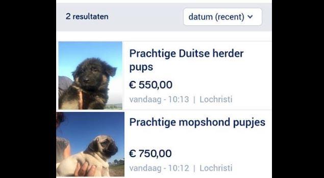 screenshot verkoop