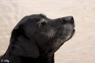 National black dog day en zijn dubbele betekenis