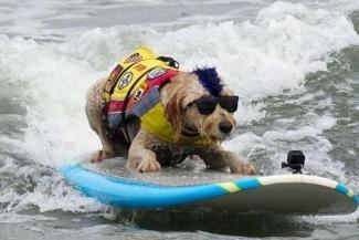 Riding the waves... de honden-WK surfen