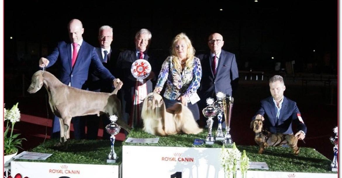 Erepodium-ambitie, neem een Lhasa Apso of Bearded Collie