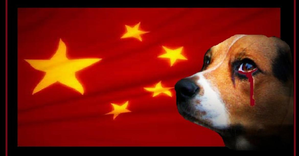 Brief Raad van Beheer over Yulin Dog Meat Festival