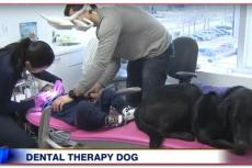 Even voorstellen: de tandarts-therapiehond!