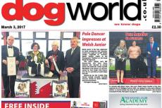 Dog World failliet