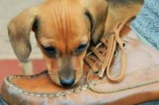 We denken langer na over schoenen dan over een pup